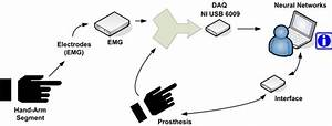 Decoding Arm Movements By Myoelectric Signal And