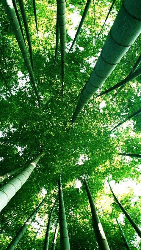 绿竹林护眼手机壁纸_风景壁纸_手机壁纸_91主题之家