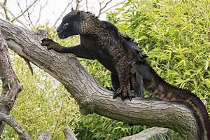 12 Animal Hybrids You Wont Believe Really Exist. ~ Google+