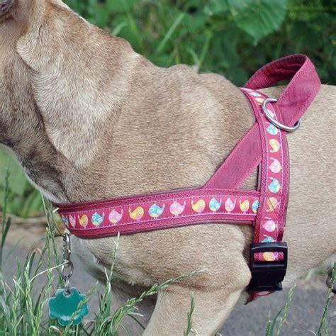 neuer norweger aufregender spaziergang diy dog