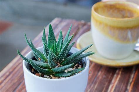 plante pour chambre à coucher 5 plantes pour purifier votre chambre page 5 of 5 page 5