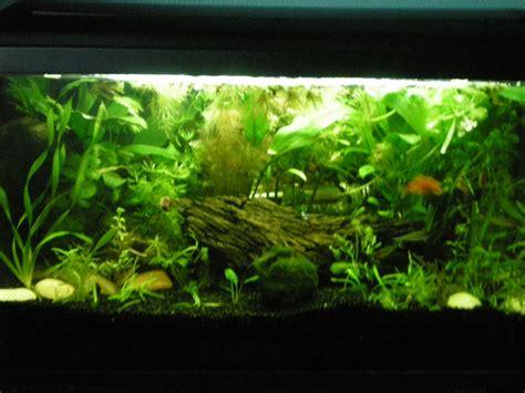 les photos de nos aquariums cr 233 ation d aquarium eau douce aqua