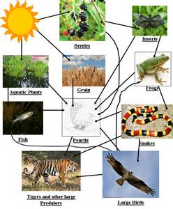 Tropical Rainforest Biome Food Web