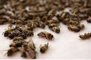 Мазь из подмора пчел для суставов