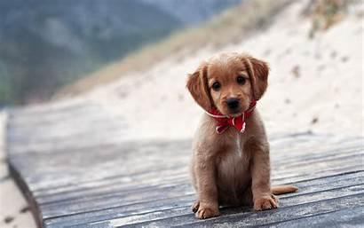 Puppy Wallpapers Desktop Macbook