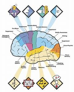 Brain Jack Image: Brain Functions Diagram