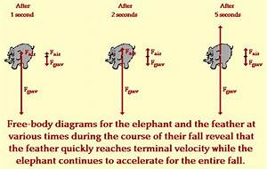 Elephant And Feather  Air Resistance