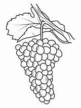 Grapes Coloring Pages Drawing Grape Printable Vine Da Line Uva Colorare Disegno Template Gratis Stampare Clusters Uvas Disegni Raisin Fruits sketch template