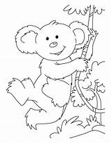Koala Coloring Pages Bear Hmong Swinging Printable Bears Animal Cells Types Popular Getcolorings Place sketch template
