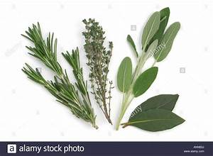 Fresh Herbs Rosemary Thyme Sage and Bay Leaves Stock Photo ...
