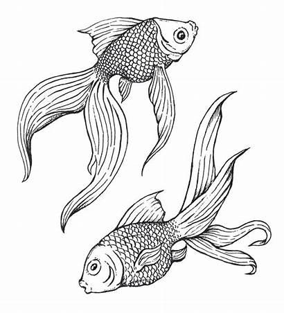 Fish Drawing Koi Easy Pen Ink Drawings