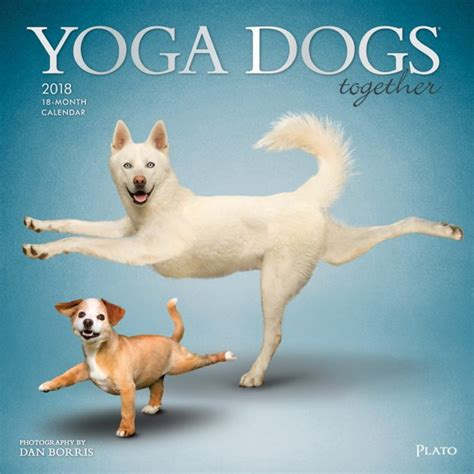 yoga dogs wall calendar plato calendars