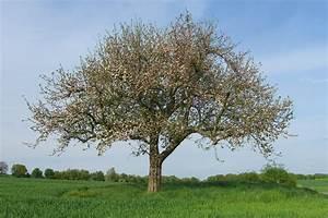 Pflanzen Im Mai : apfelbaum im mai foto bild pflanzen pilze flechten b ume einzelb ume bilder auf ~ Buech-reservation.com Haus und Dekorationen