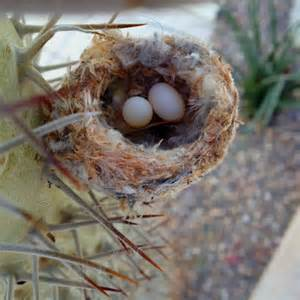 Hummingbird Nest Look Like