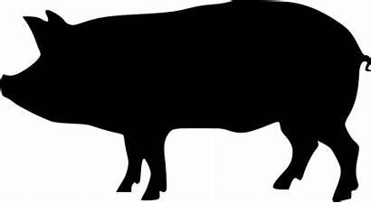 Pig Svg Silhouette Clipart Pigs Icon Transparent