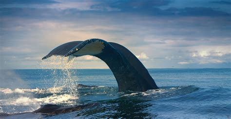 whales die natural history museum