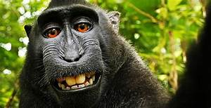 Primatologist Agrees Monkey Who Took A Selfie Owns The