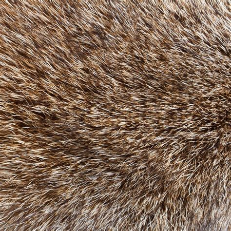 close  shot  abstract wolf fur background stock