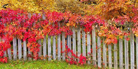 Garten Auch Im Herbst by Garten Im Herbst Herbstpflege Im Garten Gartenkalender