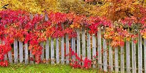 Garten Im Herbst : garten im herbst herbstpflege im garten gartenkalender ~ Watch28wear.com Haus und Dekorationen