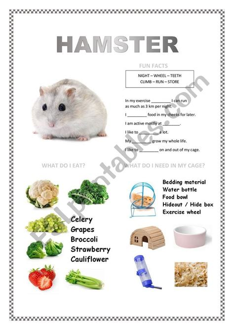 Hamster can reach 2 to 13 inches in length, depending on the species. PETS 2 (hamster, fish, turtle, parakeet) en 2020 | Educacion