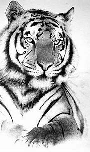 25 Powerful Tiger Tattoos For Men and Women | White tiger ...