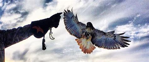 falconry orientation workshop ontario hawking club