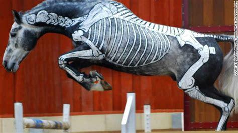 animals transformed  creepy skeletons  halloween