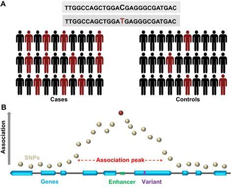 drosophila  genome wide association studies  review
