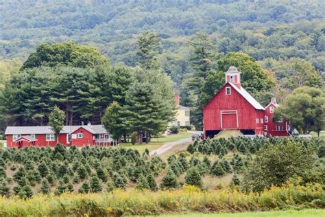 christmas tree farm for sale a tree farm for sale in vermont home