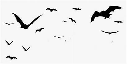 Bats Halloween Bat Silhouette Transparent Birds Bird