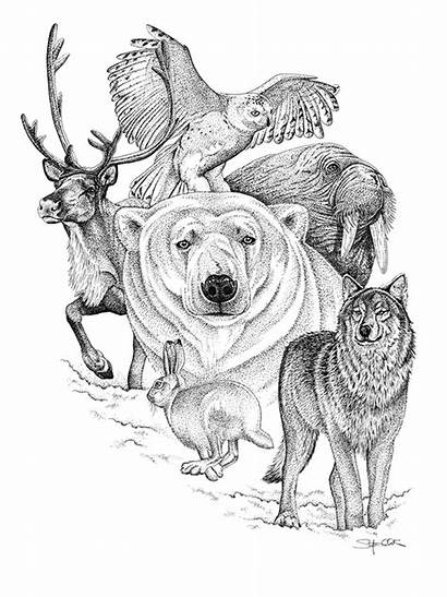 Pen Ink Coloring Pencil Pages Drawings Animals
