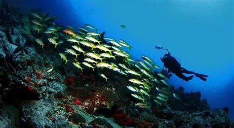 taman laut bunaken  manado