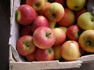Caisse De Pomme : pommes acidul es elstar melrose granny reinettes ~ Teatrodelosmanantiales.com Idées de Décoration