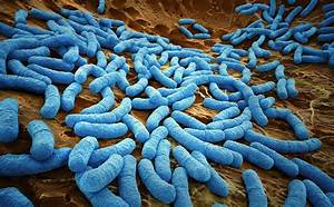How Many Cells Are In The Human Body U2014and How Many Microbes