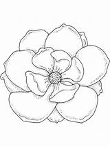 Magnolia Coloring Drawing Template Flower Flowers Tree Sketch Printable Lily Draw Templates Colors Recommended Getdrawings sketch template
