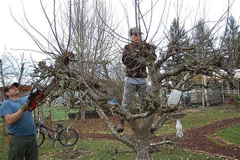Fruit Tree Pruning  On The Banks Of Salt Creek
