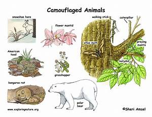 Image Gallery species adaptations