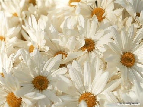 White Flower Background Cool Flower Backgrounds Wallpaper Cave