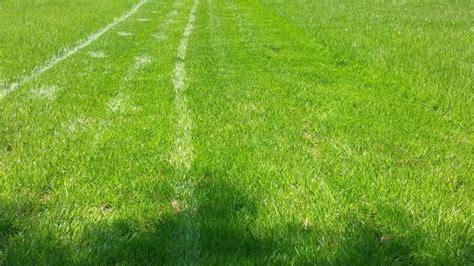 Wann Rasen Das Erste Mal Mähen by Anleitung Zum Rasen S 228 En Tipps Zur Rasenansaat