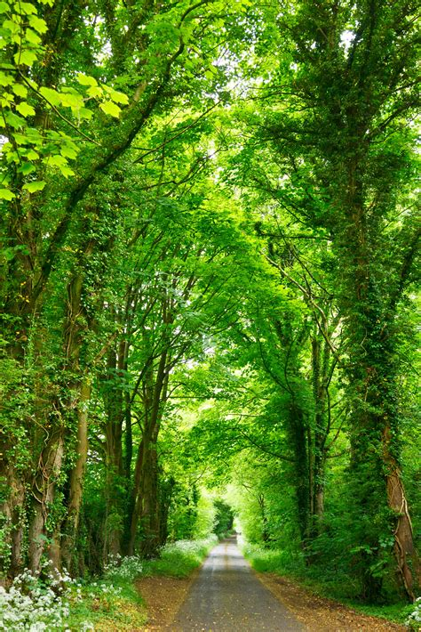 Green Forest Photo by Hd Wallpaper A Narrow Road Lined With Fresh Green Trees
