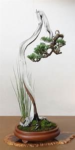 Bonsai Baum Garten : 3228 besten bonsai bilder auf pinterest bonsai pflanzen ~ Lizthompson.info Haus und Dekorationen