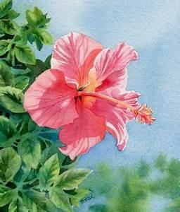 CORAL HIBISCUS watercolor floral painting - Barbara Fox ...