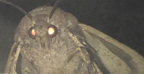 Top 10: Memes of 2018, Honorable Mention #9: Moth Lamp