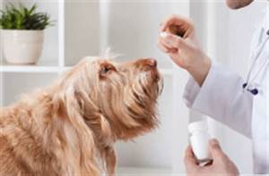 benadryl for dogs that bark