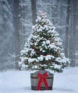 Wann Stellt Man Weihnachtsbaum Auf : ab wann stellt man den weihnachtsbaum raus weihnachtsbaum online ~ Buech-reservation.com Haus und Dekorationen
