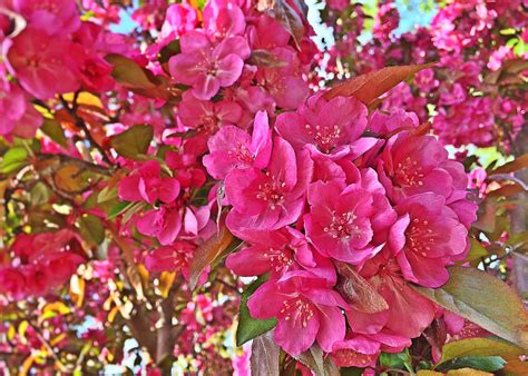 Free Images : branch blossom flower petal bloom