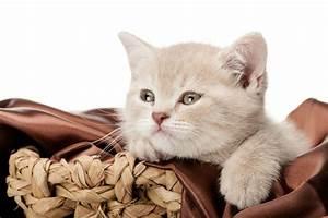 Verkleidung Für Katzen : gute transportbox f r katzen tipps tricks ~ Frokenaadalensverden.com Haus und Dekorationen