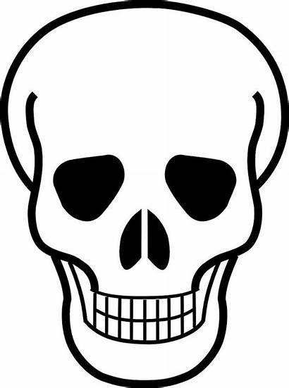 Skull Drawing Skeleton Clipart Bones Face Hand