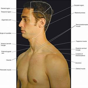 Neck And Chest Anatomy